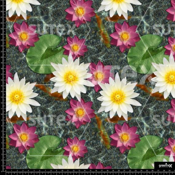 P496 lotus