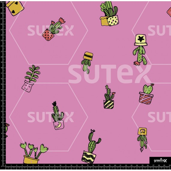 116090 Suculentas R